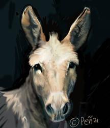 burro study by Reptangle