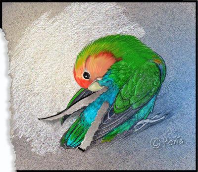 Lovebird by Reptangle