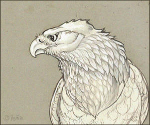 Eagle july 2 Zooly daily challenge by Reptangle