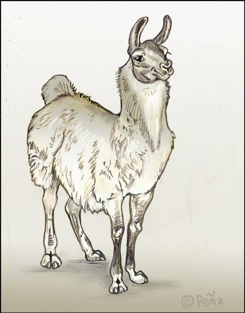 llama by Reptangle
