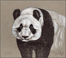Giant Panda by Reptangle