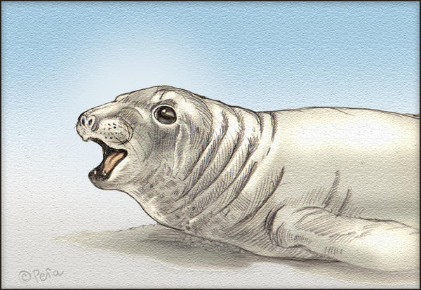 Seal by Reptangle