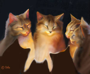 Cat  Circle Working2 by Reptangle
