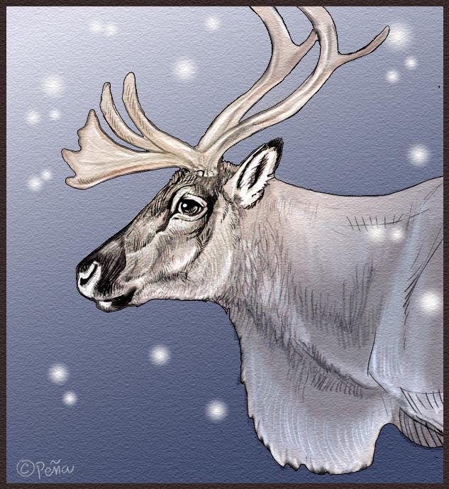 Reindeer by Reptangle