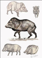 Javelina page by Reptangle