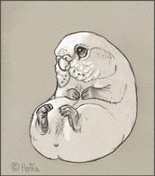 Poad (tm) by Reptangle