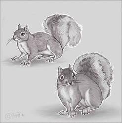 I drew Squirrels