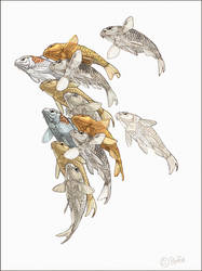 Koi From the Bottom study