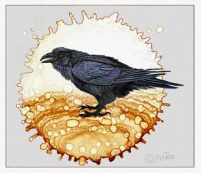 Raven On Spot