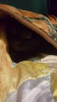 Look at my cat