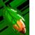 L-chan's leaf by Warped-Dragonfly