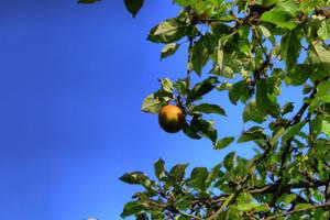 apple by LotusOnlineDe