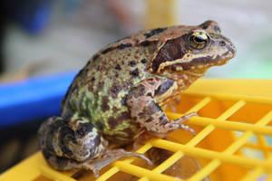 Toad I by LotusOnlineDe
