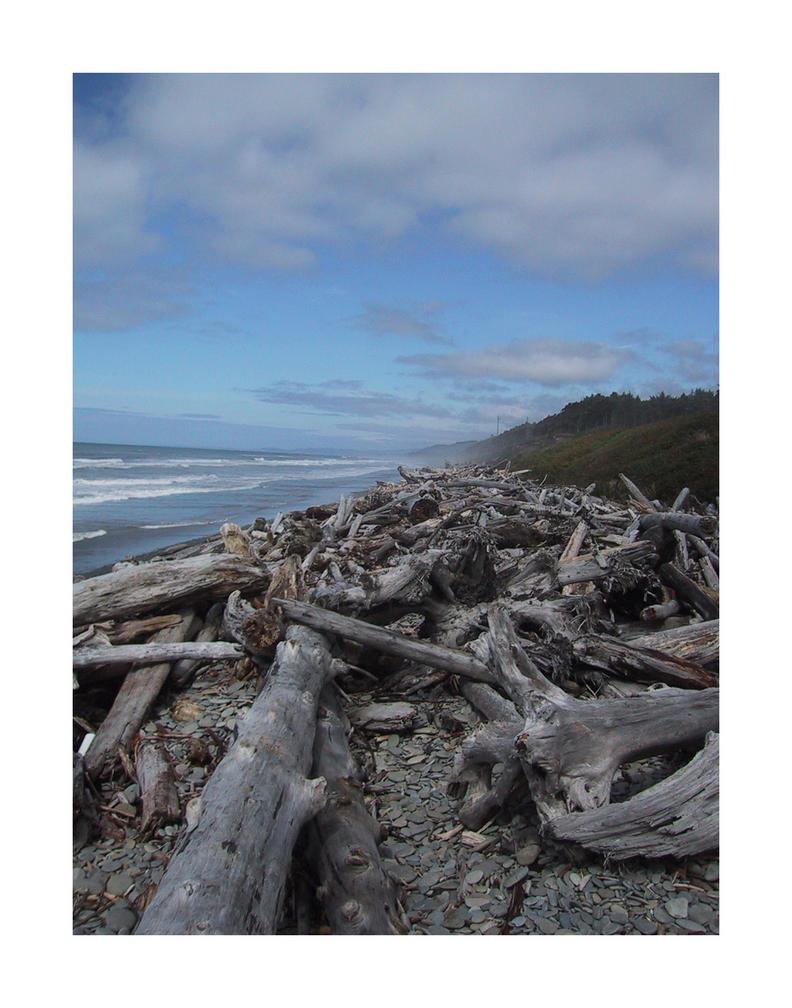 Beach Logs by jmm