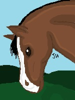 Horse Digital Drawing by jackiehorse