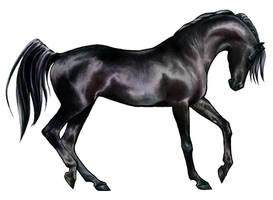 Shai'tan: Black Arabian Horse by akuinnen24