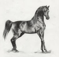 Arabian Stallion - Pyro Thyme SA by akuinnen24
