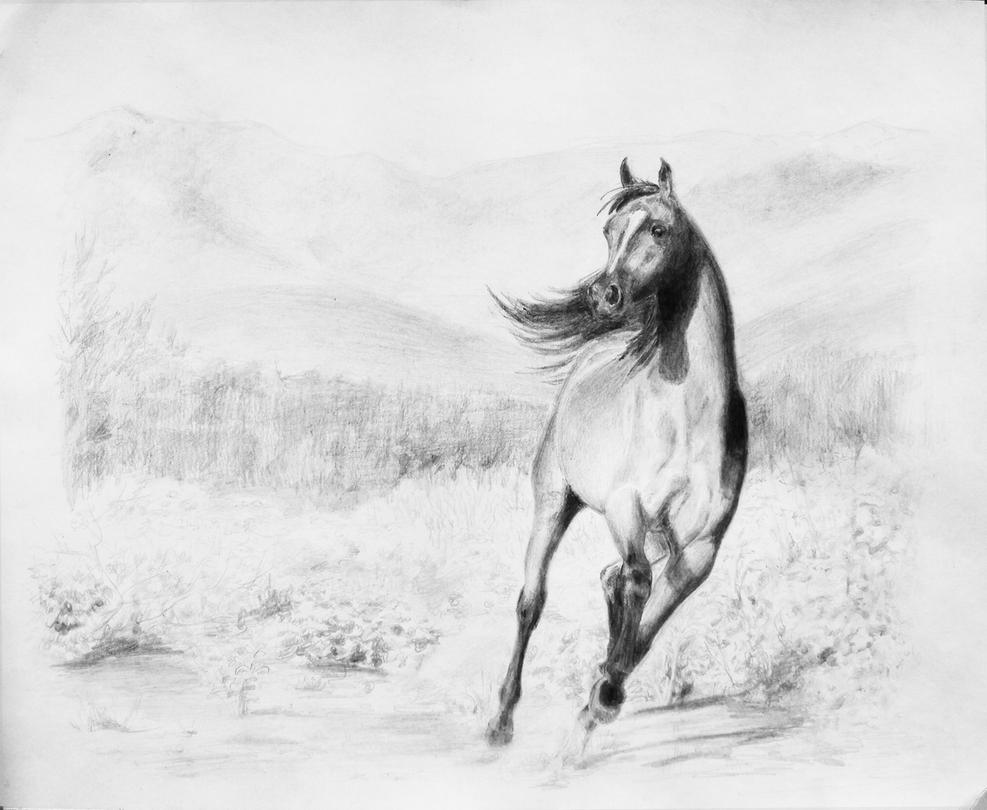 Running arabian horse drawing - photo#14
