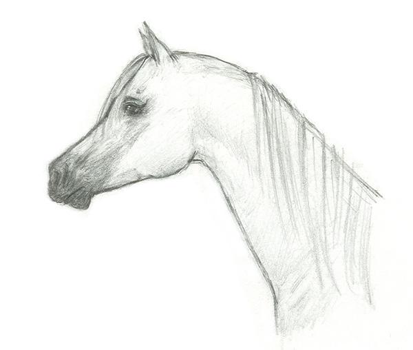 Running arabian horse drawing - photo#20