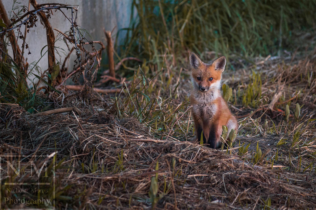 Fox Kit by Npm98