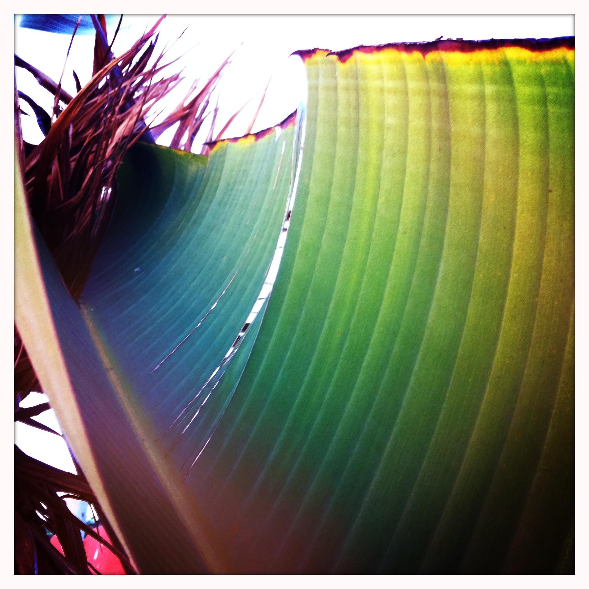 Leaf 1 by Ruben-P