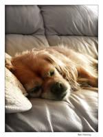 My Dog by MediaDesign