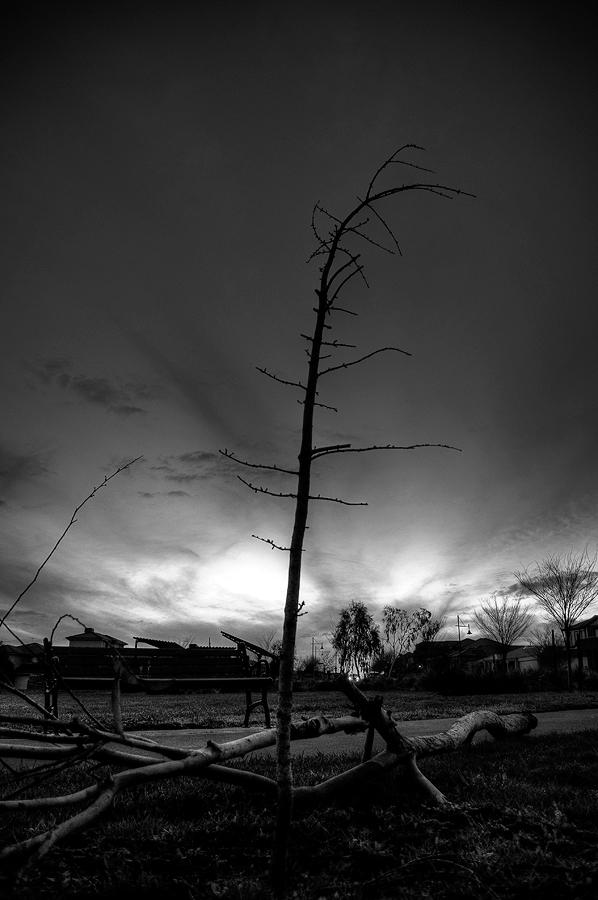 Twig by MediaDesign