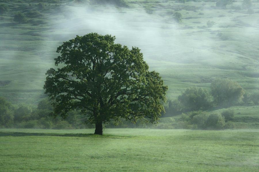 tree by cornelvoicu1989