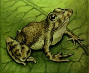 Leopard Frog by HedwigtheStrange