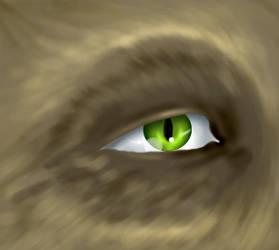 Furry face eye