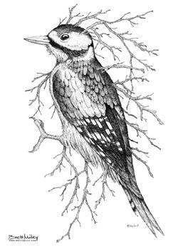 Leaf Woodpecker