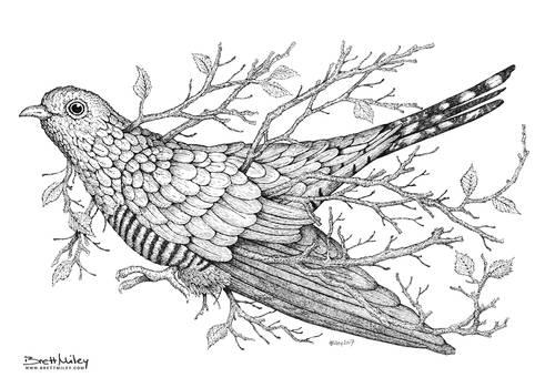 Leaf Cuckoo