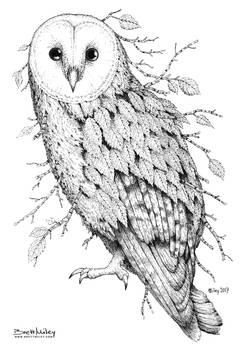 Leaf Barn Owl