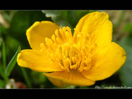 wallpaper_yellow dream by vxside