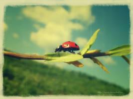 ladybug - vintage by vxside