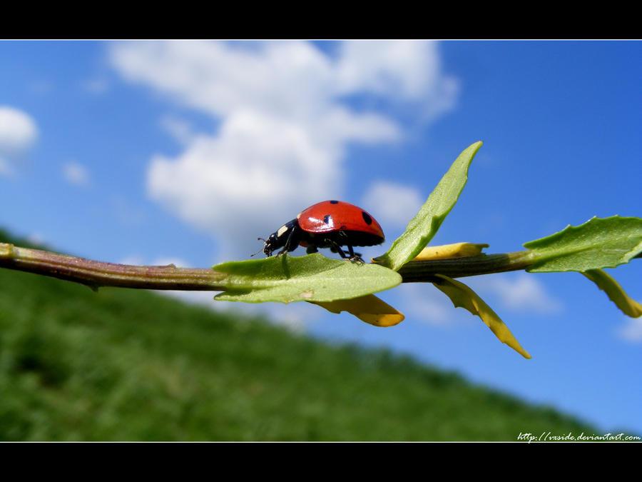 ladybug by vxside