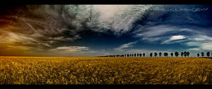A dream in a wheat field -Pano
