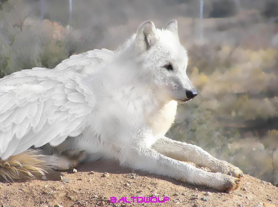 White angel wolf by Sedo00 on DeviantArt