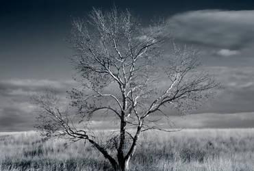 Solitude by GeminiMuse