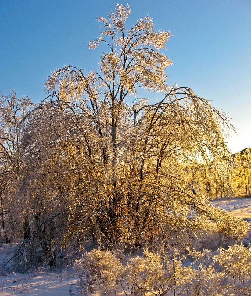 Frozen by JustChasingFireflies