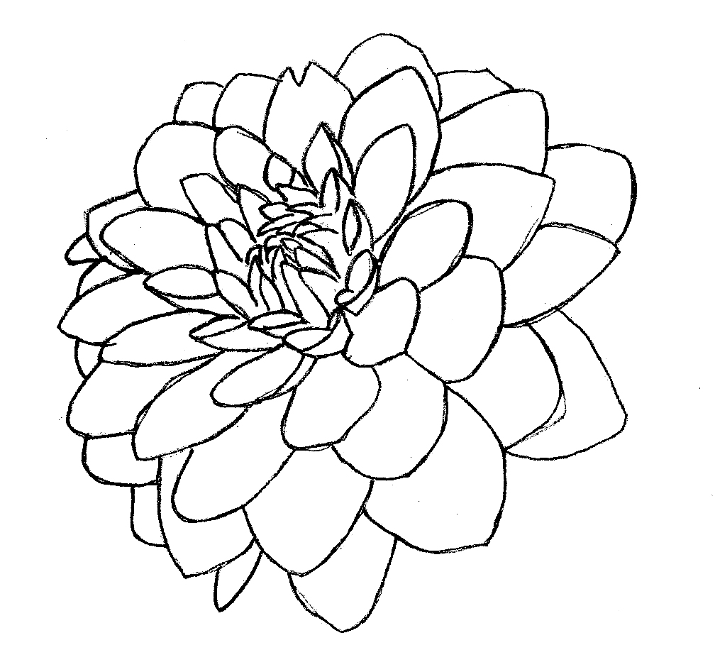 purple coloring pages - purple dahlia line art wip by robouser1469 on deviantart
