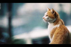 Feline by lukedecena