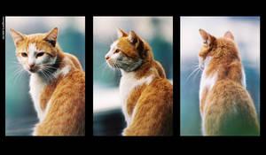 Feline 2 by lukedecena