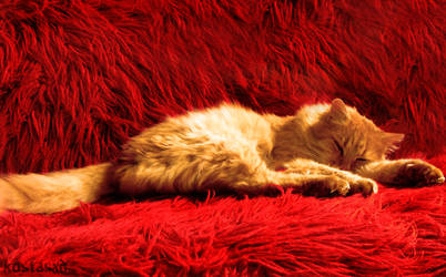 Bruno The Cat by KoSTaSxD