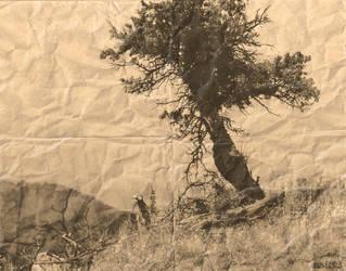 One Tree Hill by KoSTaSxD