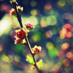 Spring memories. by magnesina
