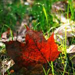 fallen leaf. by magnesina