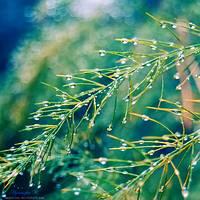 fresh autumn. by magnesina