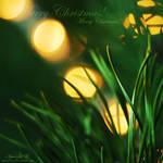 light light. by magnesina