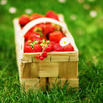 strawberry pleasure.